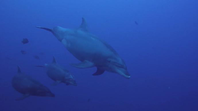 delfines revillagigedo